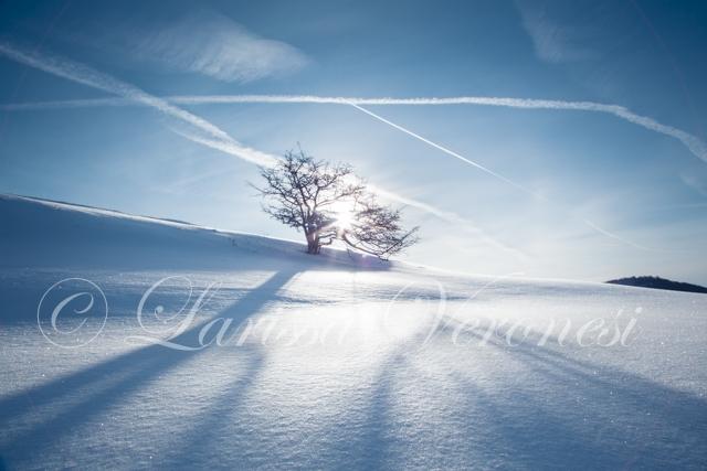 Baum im Schnee, Schwäbische Alb