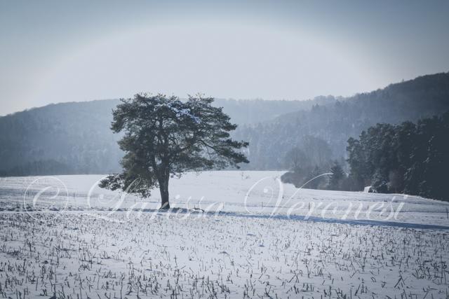 Schneelandschaft, Pfälzerwald bei Kaiserslautern